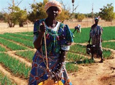 Agriculture in the Sahel Region, Burkina Faso