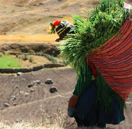 A andean woman climbs down a steep mountain to reach the piece of land where her animals graze