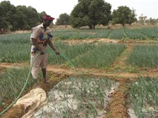 Agriculture is the main employment sector and income source throughout rural Burkina Faso