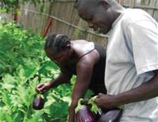 Harvesting eggplants from NIPP kitchen garden in Ulang County, South Sudan